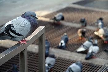 BirdControl